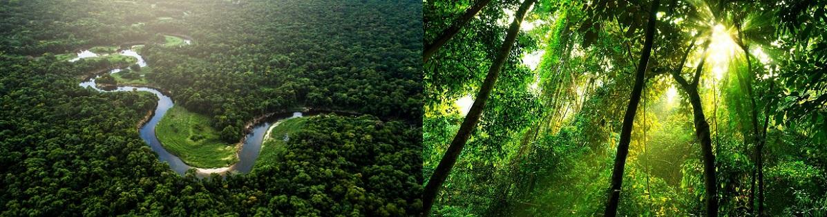 amazon brazil جنگل آمازون برزیل تور
