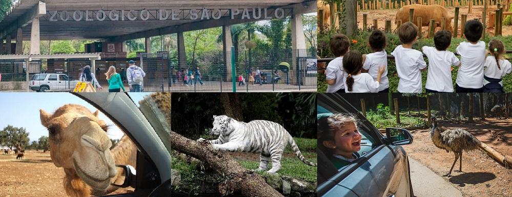 باغ وحش سافاری برزیل