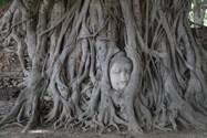 ayutthaya city